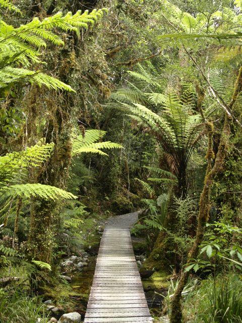 Regenwald immer wieder, hier am Lake Matheson