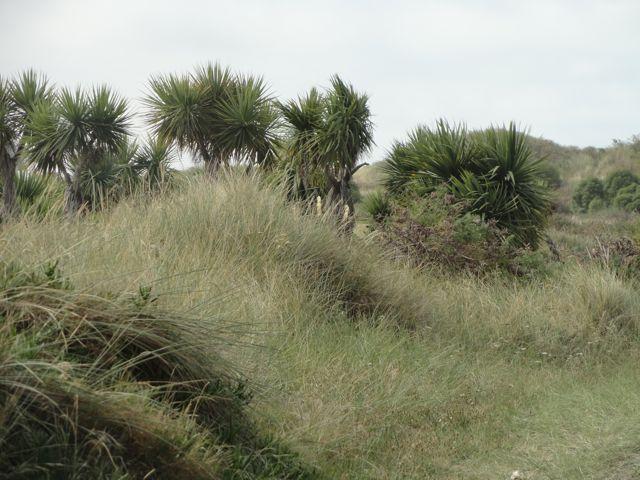 Hier siehts aus wie auf Amrum - wären da nicht die Palmen!