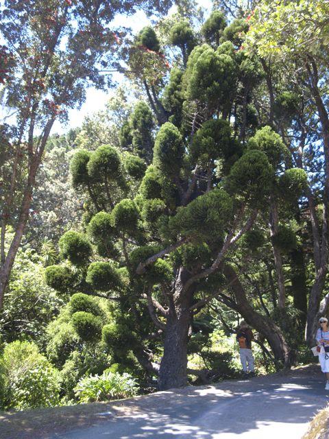 Botanischer Garten, Wellington