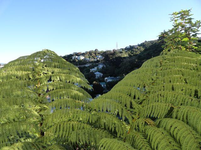 Neuseeland Januar 2013 903