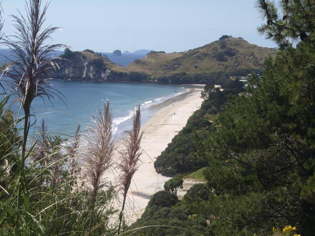 Hahei Beach von oben