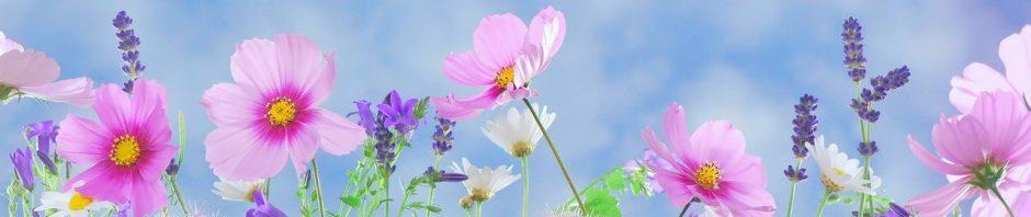 Wildblumen rosa lila